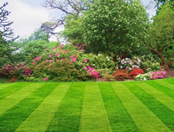 Lawn Care Reviews In Orange County